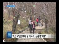 (R) 꽃망울 터트리는 벚꽃...서부경남 '봄꽃 향연' 성큼