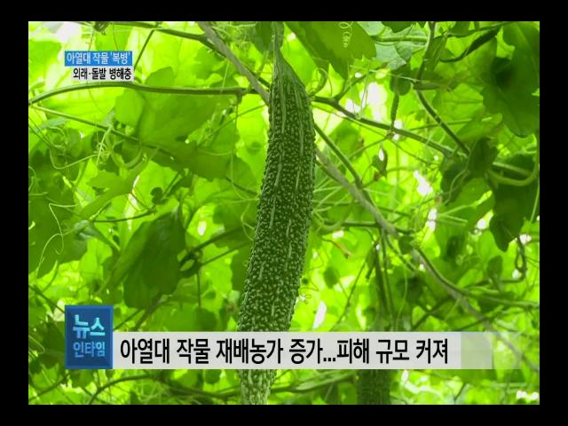 (R) 아열대 작물 늘자 병해충도 늘었다